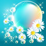 Bubbles and daisy Royalty Free Stock Photos
