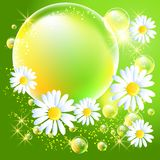 Bubbles and daisy Royalty Free Stock Images
