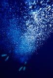 bubbles fenor n royaltyfri foto