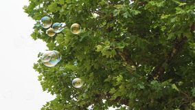 Bubbles in Flight 5. Bubbles in Flight under a tree Royalty Free Stock Photo