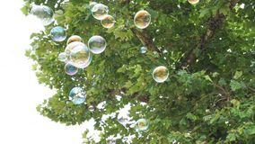 Bubbles in Flight 3. Bubbles in Flight under a tree Stock Photos