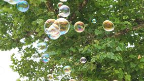 Bubbles in Flight 2. Bubbles in Flight under a tree Royalty Free Stock Photography