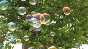 Bubbles in Flight 4. Bubbles in Flight under a tree Stock Photos