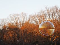 Bubbles floating away in the sunlight above the park, with one large bubble in foreground about to burst. Stock Photos