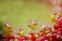 Bubbles on a flower. Macro picture of bubbles on a flower royalty free stock photos