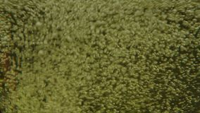 Bubbles into the glass of foamy drink, cider, champagne. Bubbles into the glass of foamy drink stock footage