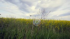 Bubbles in golden field with blue cloudy sky stock video footage