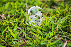 Bubbles on grass background Stock Image