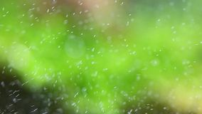 Bubbles green stock video footage
