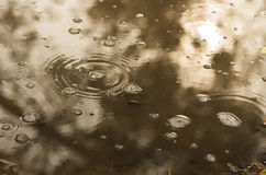 Bubbles and leaves in a muddy puddle during rain Stock Images