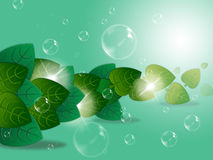 Bubbles Leaves Represents Garden Rural And Trees Stock Photo