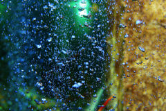 Bubbles in a lobster tank Stock Photography