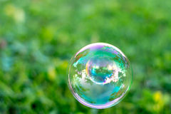 Bubbles on natural background. Bubbles on green grass natural background Stock Image