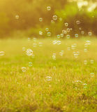 Bubbles in the park Royalty Free Stock Images