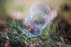Bubbles on grass Stock Photography