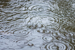 Bubbles from the rain in a puddle Stock Photos