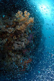 Bubbles rising up over coral reef Stock Photo