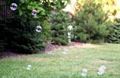 Bubbles in sunny back yard