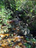 Bubbling brook in Kirstenbosch Gardens Royalty Free Stock Photo