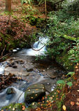 Bubbling brook in  the woods Stock Photography