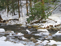 Bubbling Creek in Winter Royalty Free Stock Photography