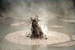 Bubbling Mud In Rotorua Stock Photography