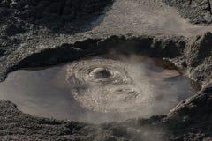 Bubbling mud pool in Rotorua Royalty Free Stock Photo