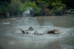 Bubbling Mud releasing Hydrogen Sulphide Gas. Geothermal Activity in Waitapu, New Zealand.  Royalty Free Stock Image