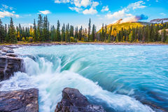 The bubbling waterfall of Athabasca. The full-water bubbling waterfall of Athabasca. The concept of extreme and ecological tourism. Clear autumn evening in royalty free stock image