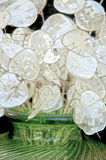Bubblor av glädje Royaltyfri Bild