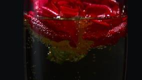 Bubblor från champagne i ett exponeringsglas med en rosebud Svart bakgrund close upp arkivfilmer