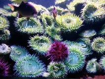 bubblor kopierar vektorn för text för avstånd för seaweeds för havet för fiskillustrationlivstid Royaltyfria Bilder