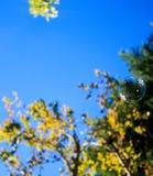 Bubblor med träd arkivfoton