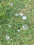 Bubblor på gräs Arkivbild