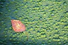 Bubblor på vatten Arkivbild