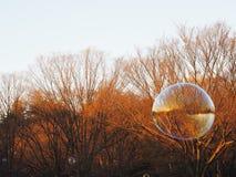 Bubblor som svävar bort i solljuset ovanför parkera, med en stor bubbla i förgrund omkring för att brista Arkivfoton