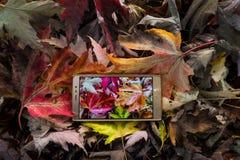 Bubla telefon w jesień liściach fotografia royalty free
