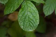 Buble en la licencia verde Foto de archivo