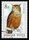 Bubo eurasien de Bubo d'Eagle-hibou, série vers 1984 Photo libre de droits