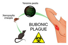 Bubonic plague Royalty Free Stock Image