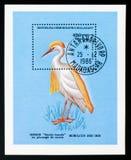 Bubulcus ibis dell'airone guardabuoi, serie degli uccelli, circa 1986 Fotografia Stock Libera da Diritti