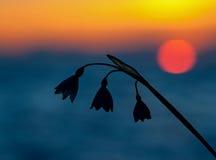 Bucaneve alla luce di tramonto Fotografie Stock Libere da Diritti