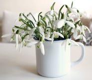 Bucaneve in una tazza Bello snowdrop Il primo segno della molla I fiori bianchi come la neve sotto forma di una campana Sorgente Fotografia Stock Libera da Diritti