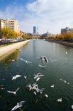 Bucarest - vista di autunno fotografia stock