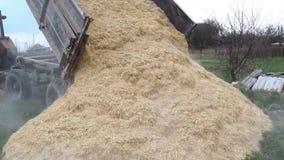 Bucce del riso stock footage