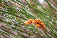 Bucce dell'erba Immagini Stock