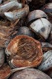 Bucce della noce di cocco Immagine Stock