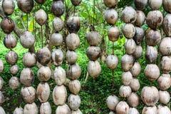 Bucce della noce di cocco Fotografia Stock