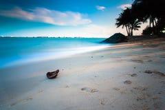 Buccia del cacao e spiaggia del mare: Costa Est di Singapore Fotografia Stock