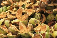 Buccia della noce di cocco Immagine Stock Libera da Diritti